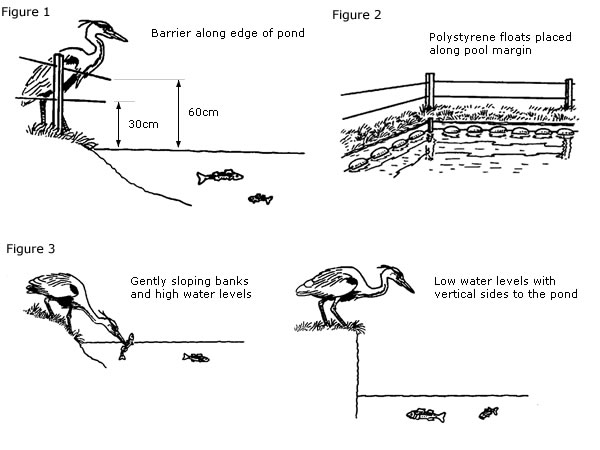 How To Stop Herons Eating Pond Fish The Rspb