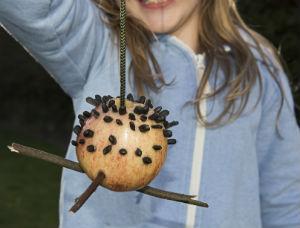 Make An Apple Bird Feeder Kids Nature Activities The Rspb