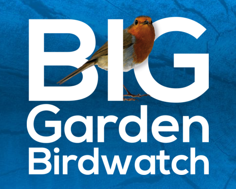 Home – Watch Suburban Birds Full Movie Online Free ...