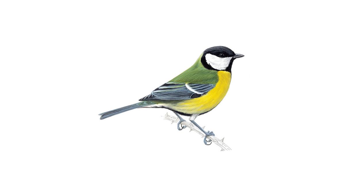 bird coloring pages rspb shop - photo#42