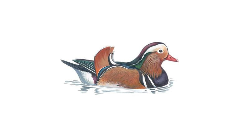 Mandarin (male)