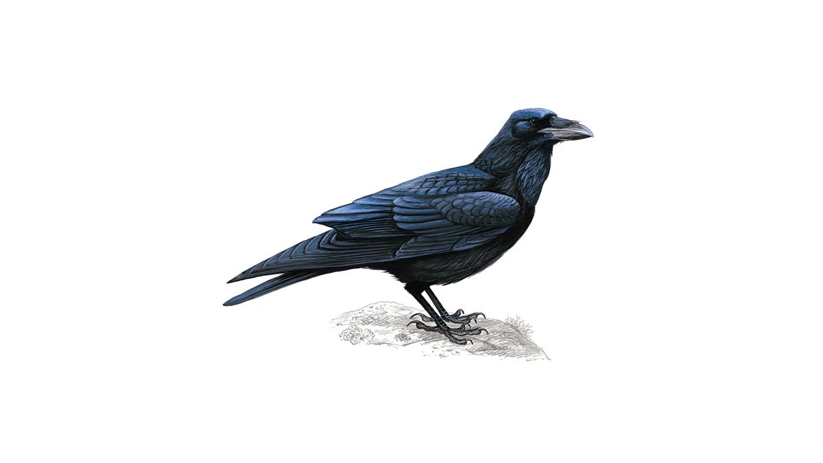 Raven Nude Photos 20