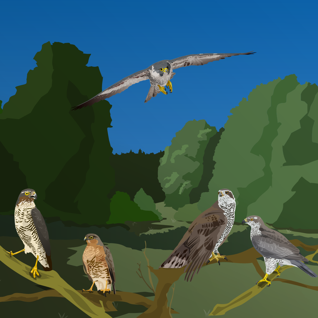 Birds Of Prey Arvostelu