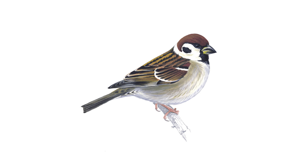 How To Make A Sparrow Nest At Home