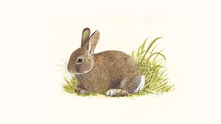 Rabbits | How Do Rabbits Eat & Other Rabbit Facts - The RSPB