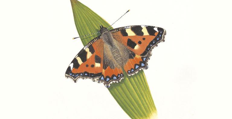 Pequeña mariposa de carey
