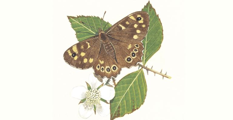 Mariposa de madera moteada