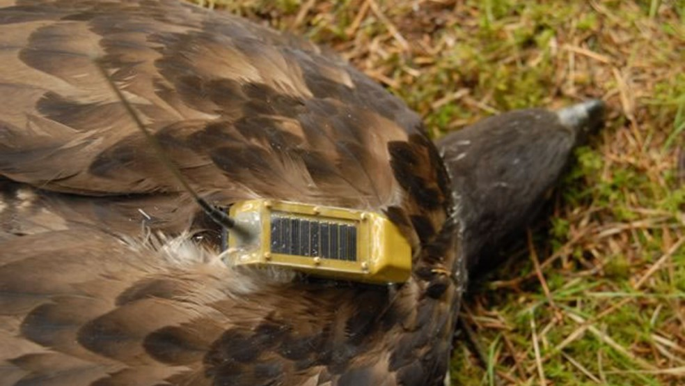 The satellite tags are powered by a small solar panel