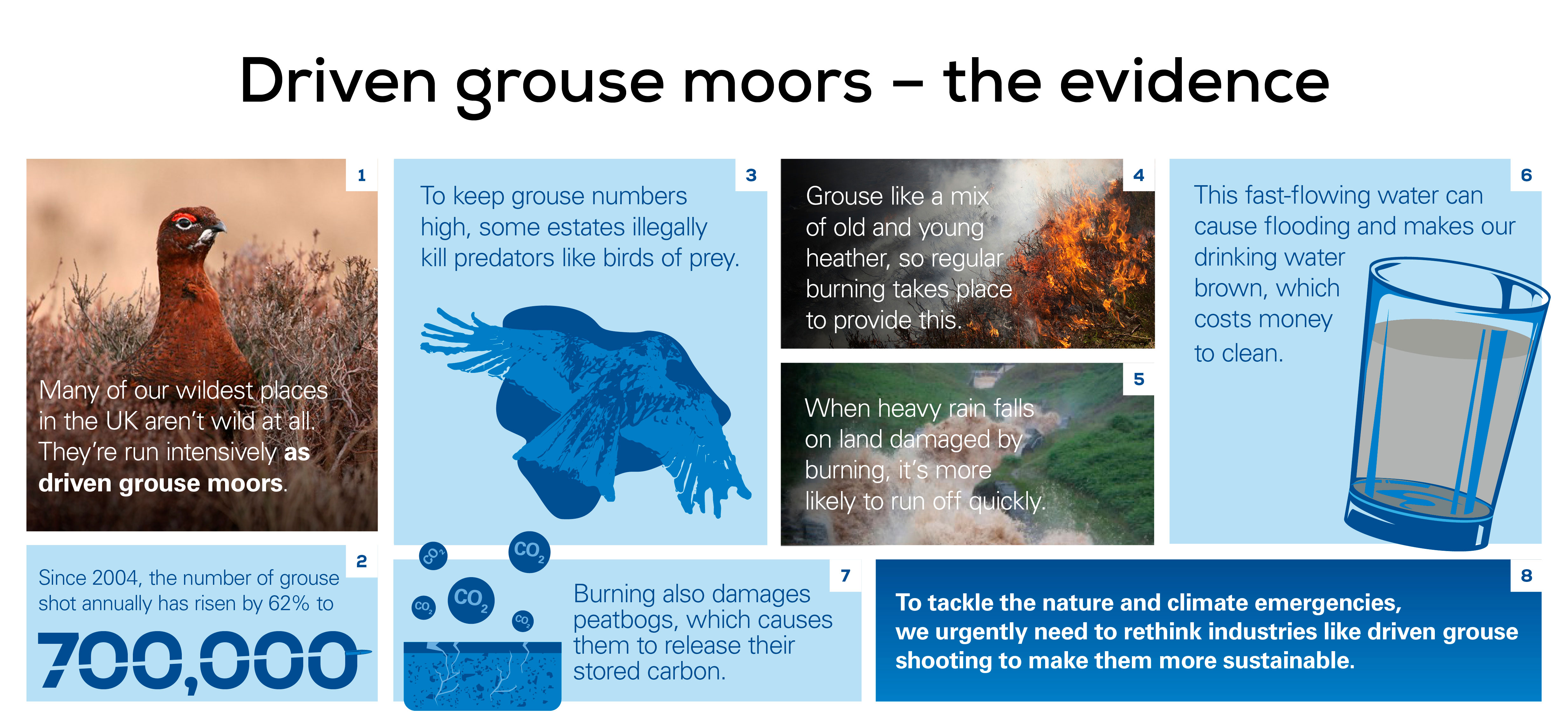 grouse infographic