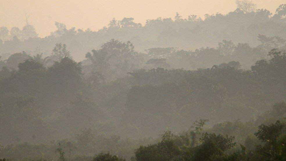Early morning mists rise over the Harapan Rainforest, Sumatra, Indonesia