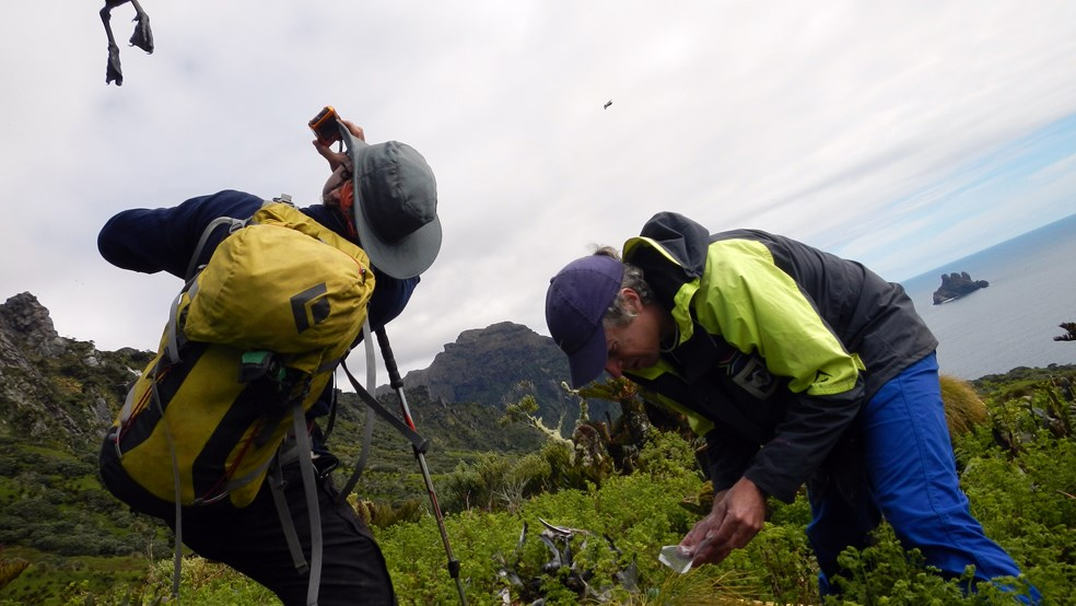 Conservationists at work on Gough Island