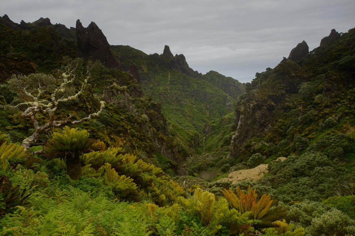gough island restoration programme conservation project