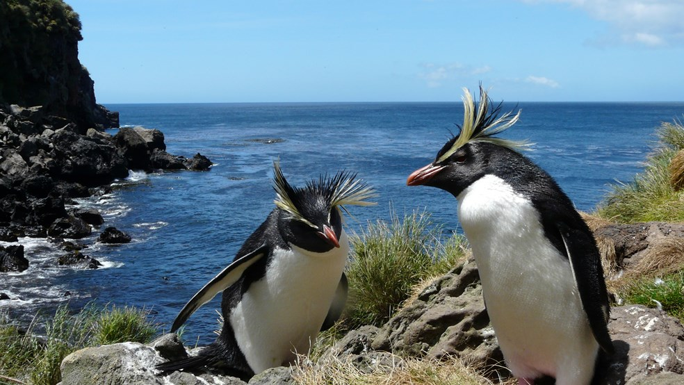 The UK has more penguins under its jurisdiction than any other country in the world
