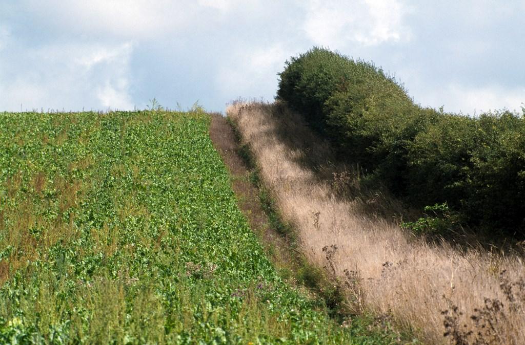 farmland hedgerow management  u0026 history