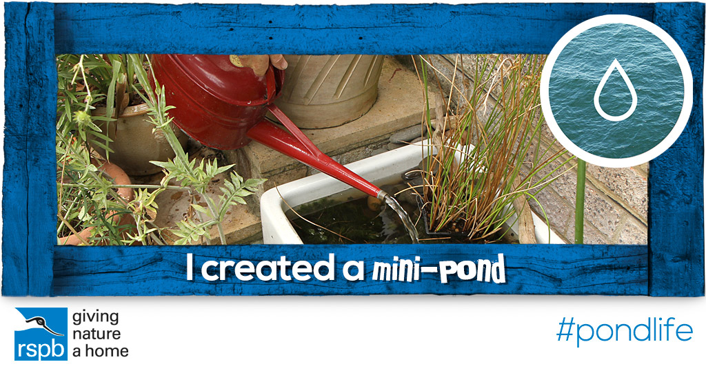 Create a mini pond