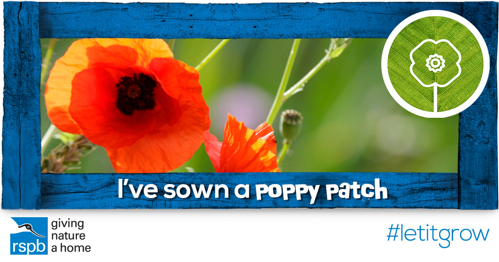 Sow a poppy patch mightylinksfo