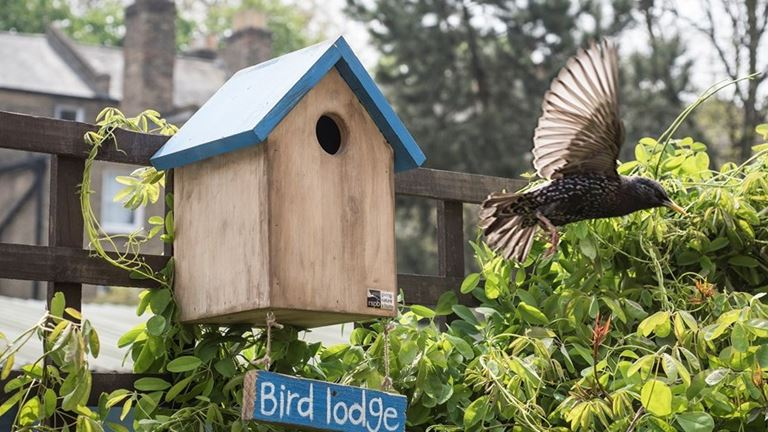 Urban Habitats Towns And Cities Learn About Nature