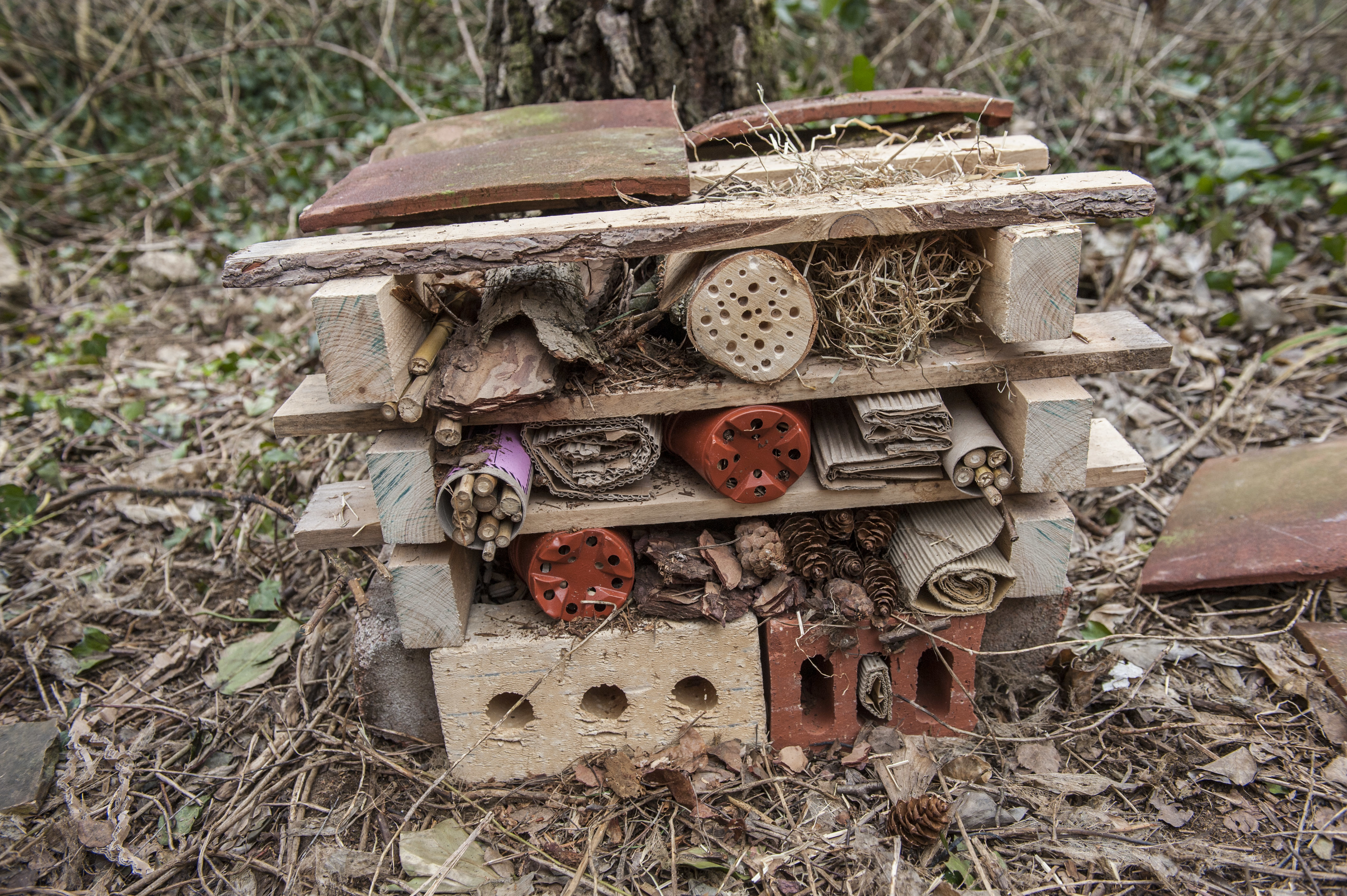 How to Make a Minibeast Hotel | Wild Challenge - The RSPB