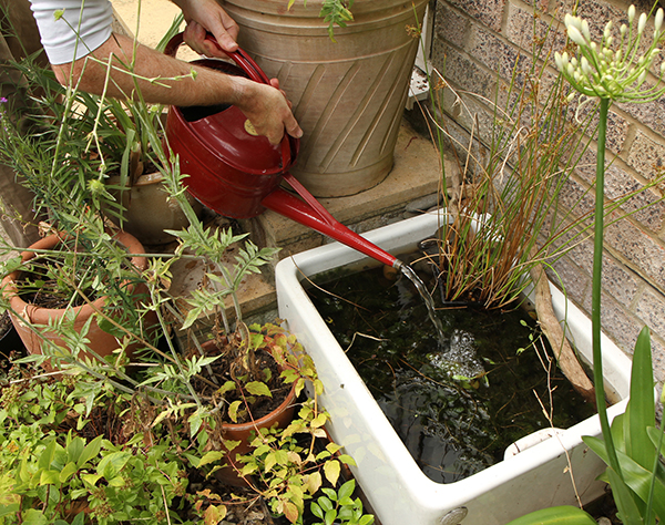 Create A Mini Pond