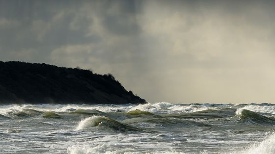 Dolphinwatch Aberdeen