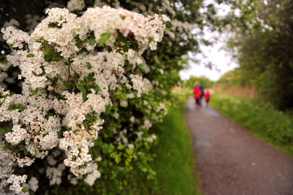 Farmers and Hedgerow Management | Conservation Advice ...