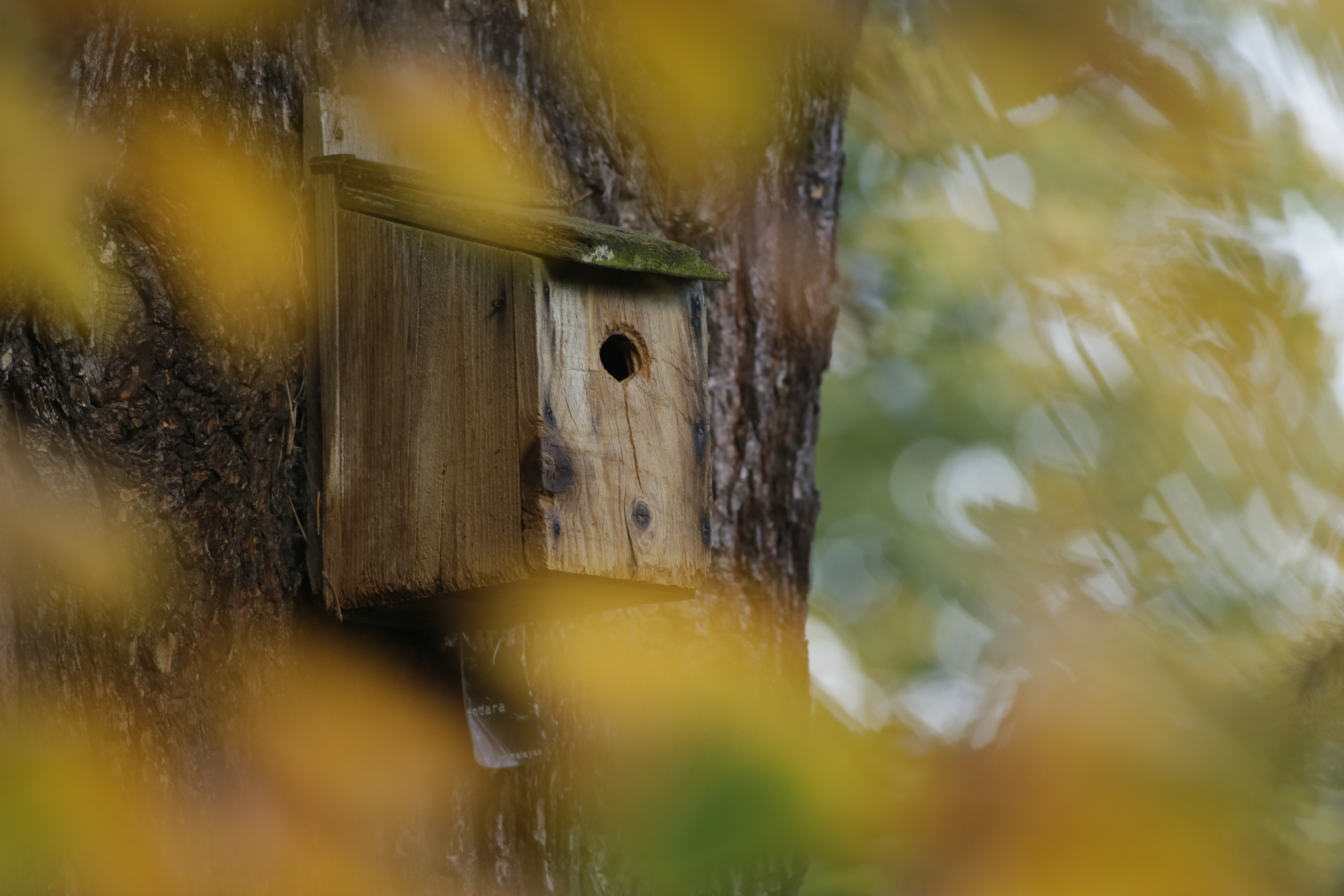 Where To Put A Bird Box Nestboxes The Rspb