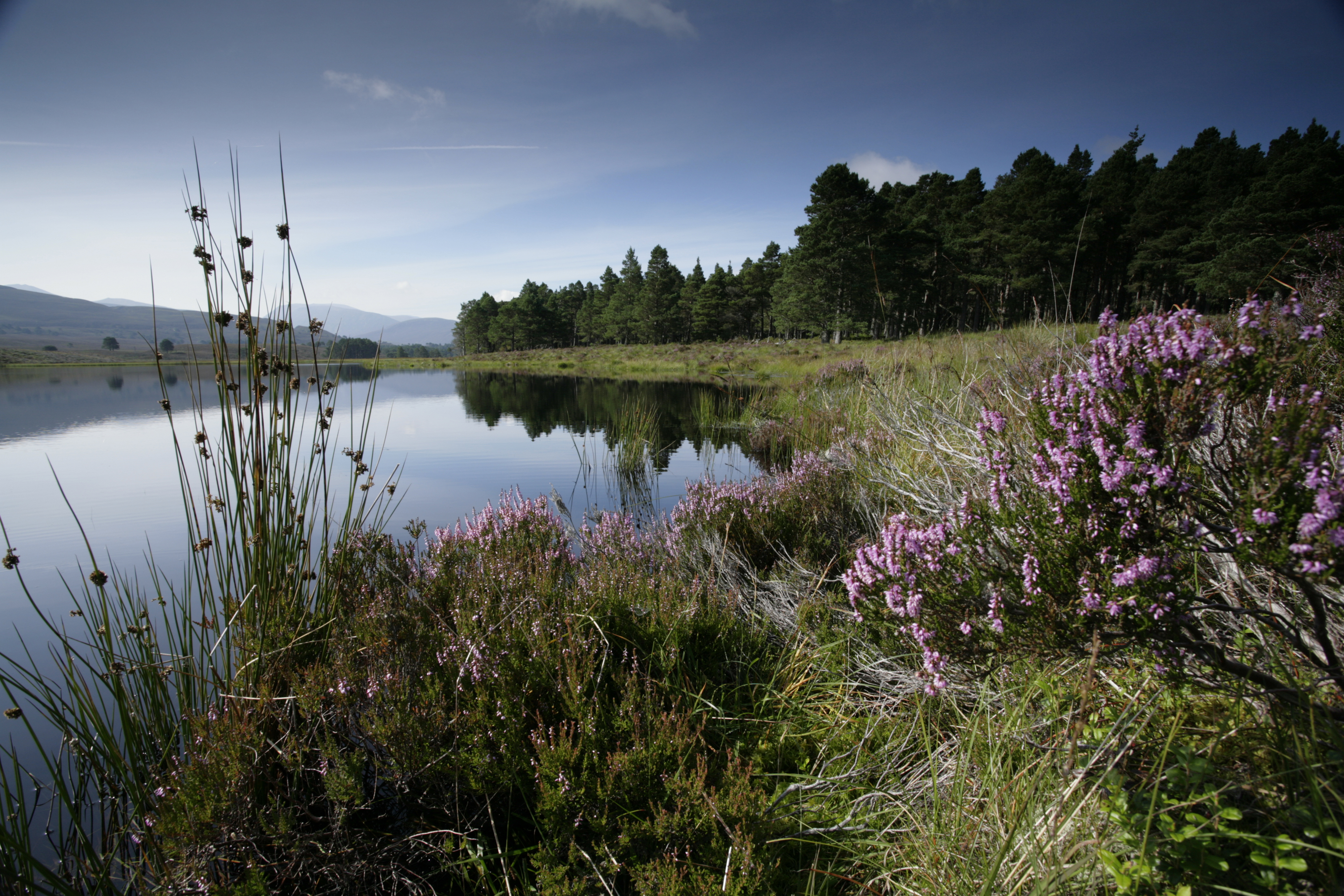 Nature Of Scotland Awards The Rspb