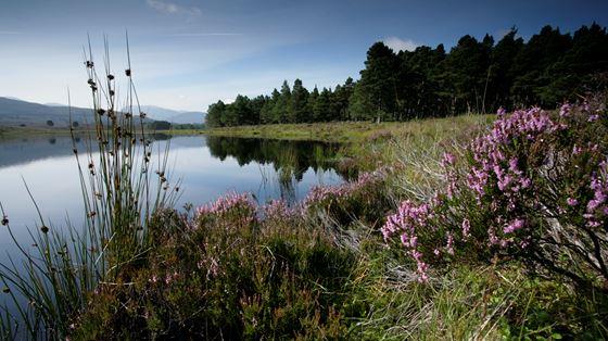 Loch Garten, Abernethy