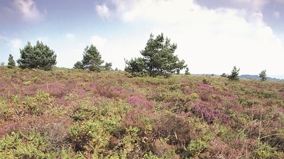 Aylesbeare Common