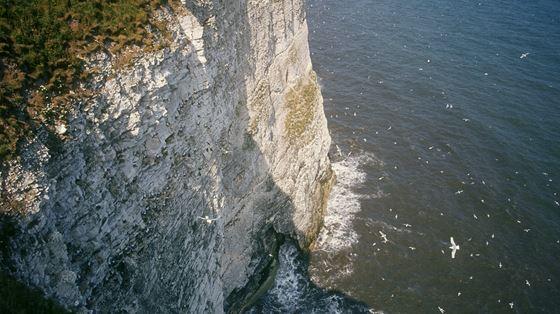 Bempton Cliffs, Yorkshire