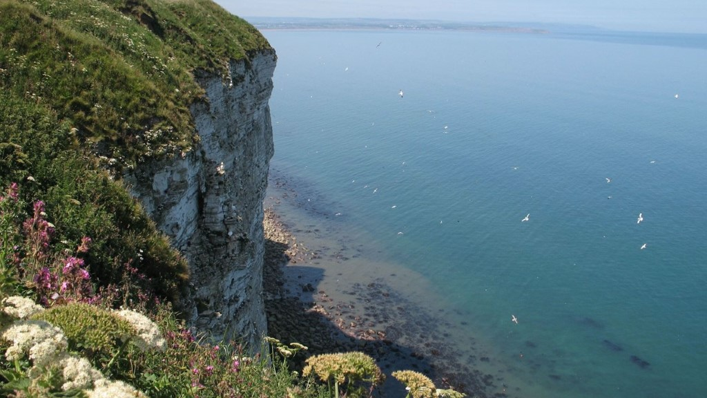 bempton cliffs nature reserve east riding of yorkshire the rspb