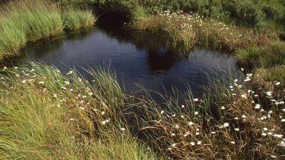 Campfield Marsh