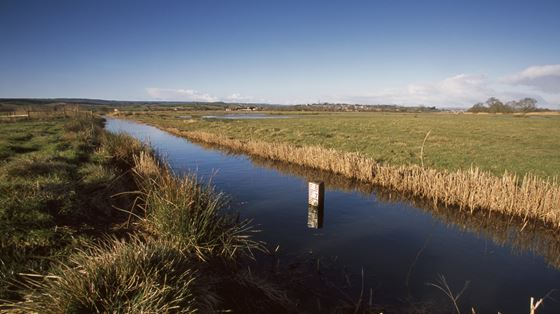 Exminster and Powderham Marshes
