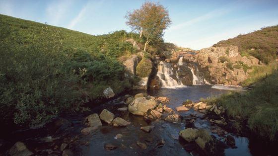 Curlew calling, RSPB Geltsdale, Cumbria