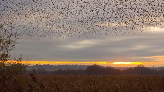 Avalon Marshes, Somerset
