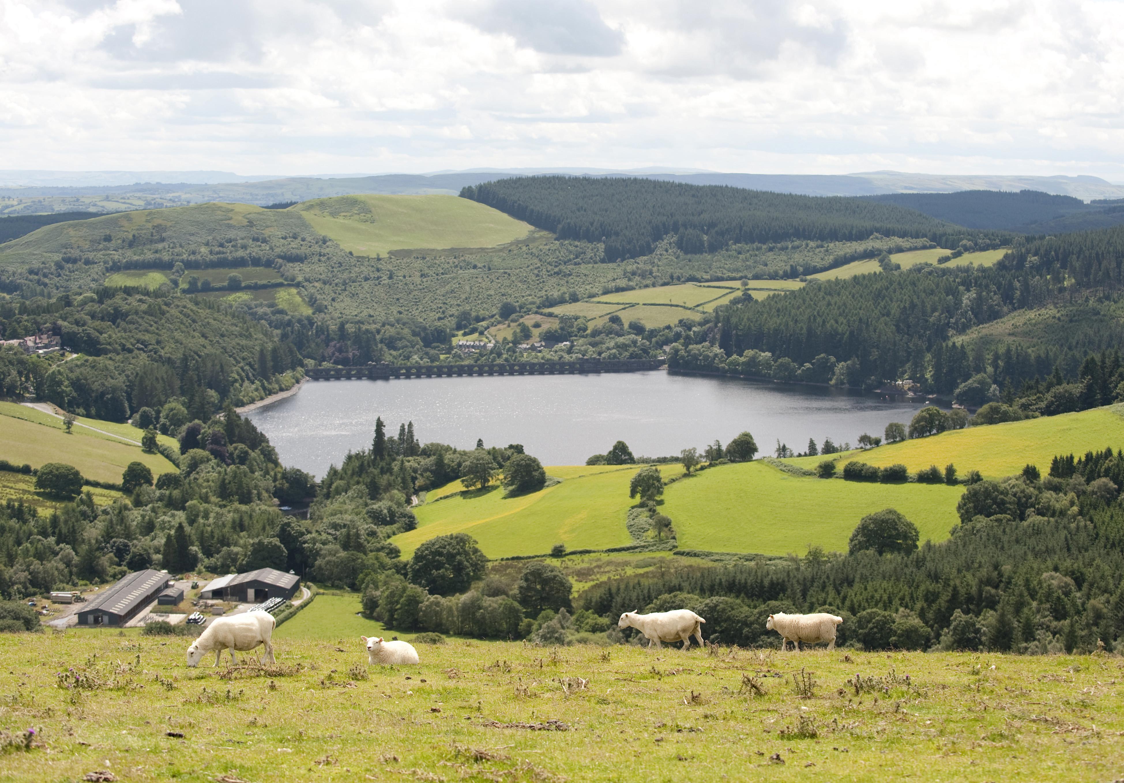 farming in wales