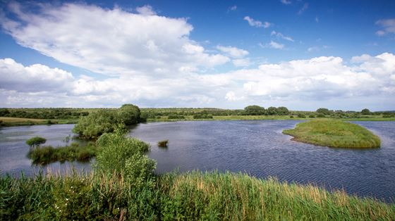 Dearne Valley - Old Moor
