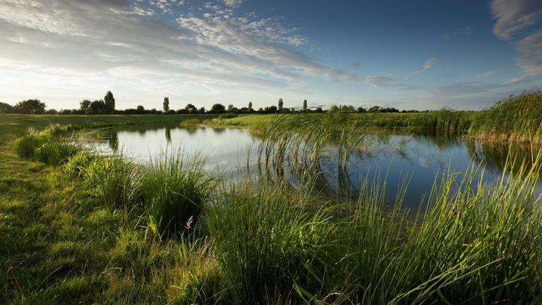 ouse fen nature reserve  cambridgeshire
