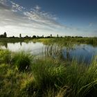 5 RSPB wetland reserves working wonders for people and wildlife