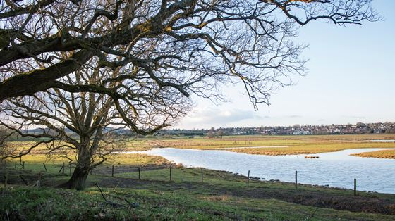 Pulborough Brooks