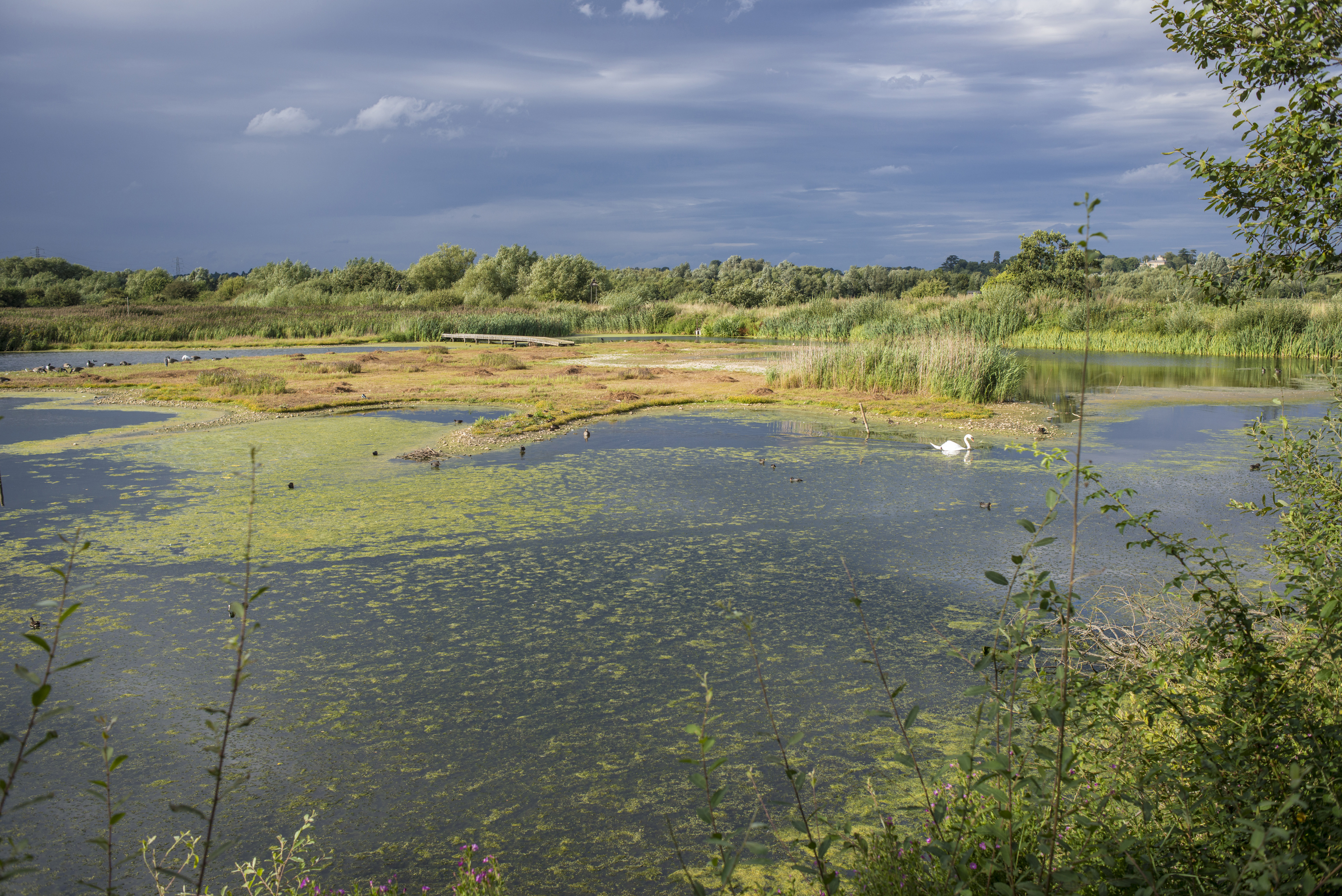 Image result for rye meads nature reserve