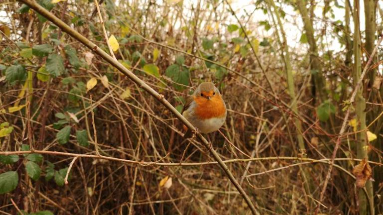 Sandwell Valley Nature Reserve, West Midlands - The RSPB