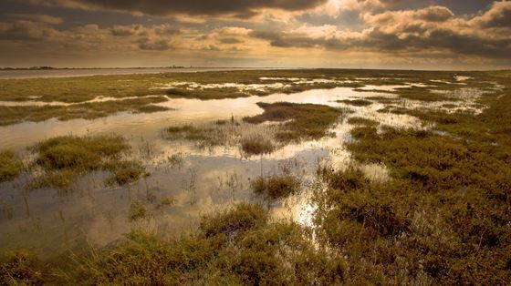 Wallasea Island Wild Coast project