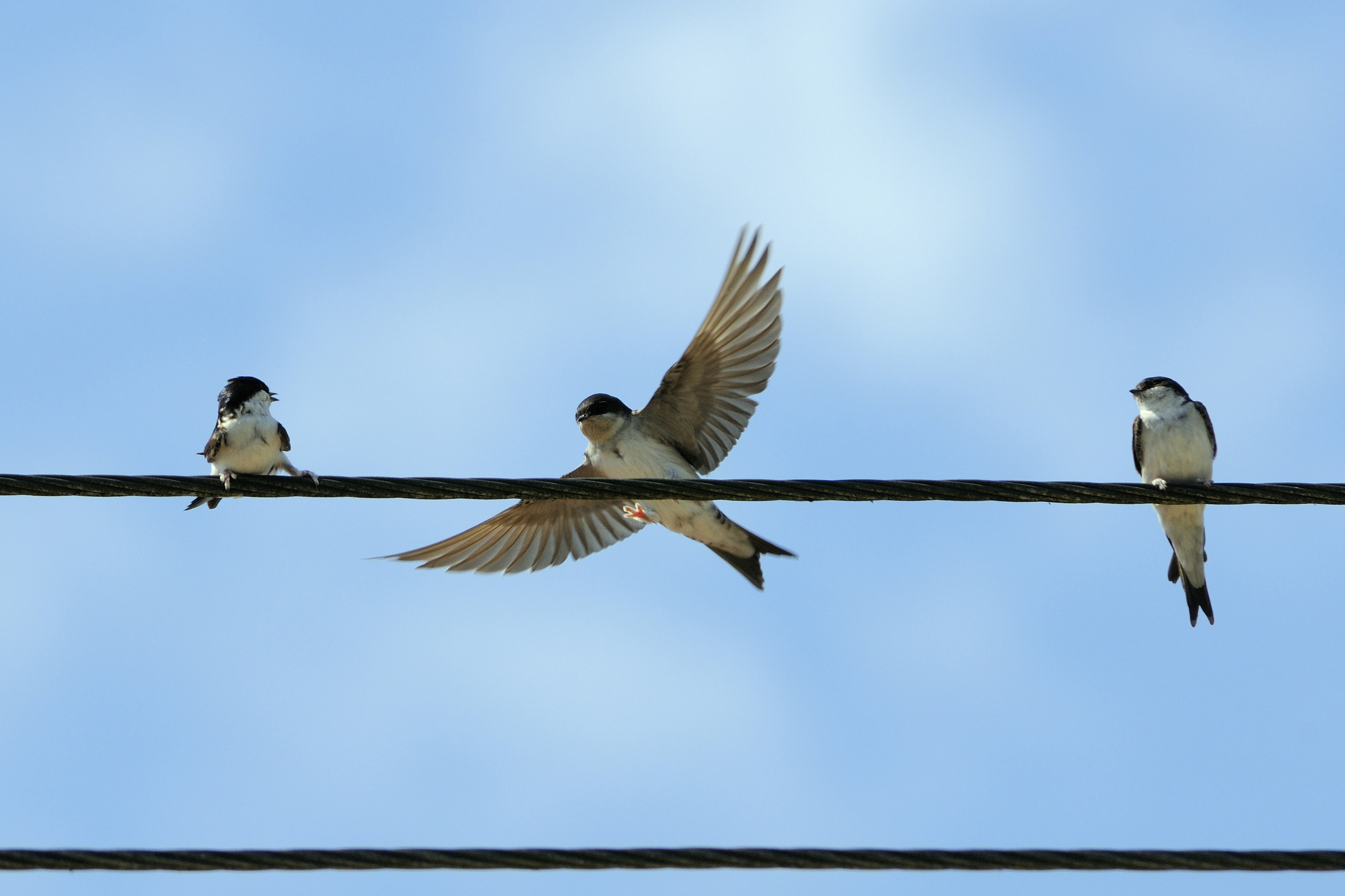 Attracting House Martins To Nest Birds Wildlife The Rspb