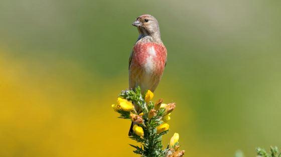 Berwickshire Arable Wildlife Project