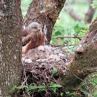 Nesting and breeding habits