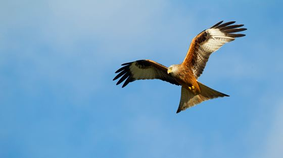 Galloway Kite Trail