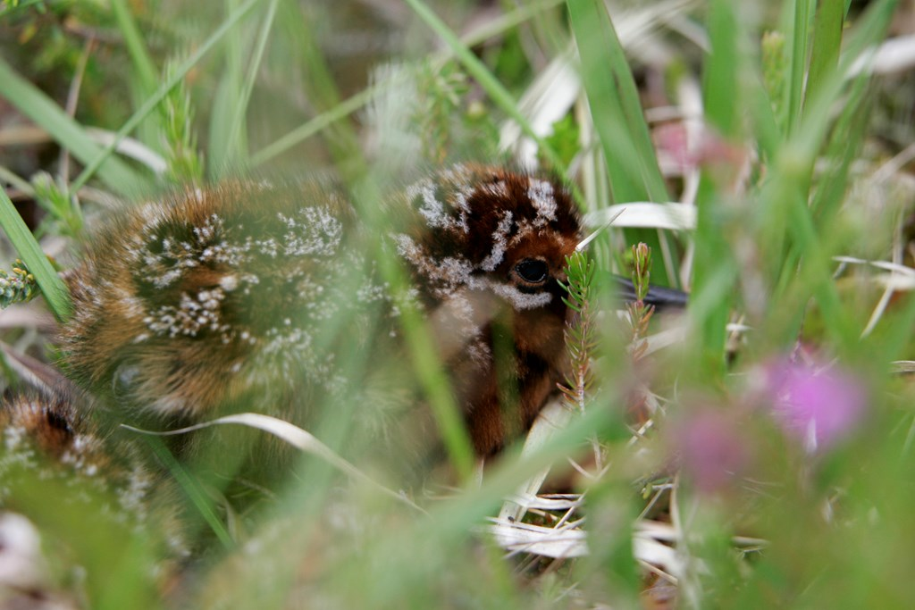 RSPB If The What Do Find Baby You - A Bird To