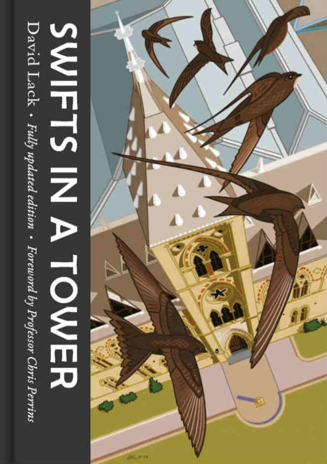 Front cover Swifts in a Tower_full-min.jpg