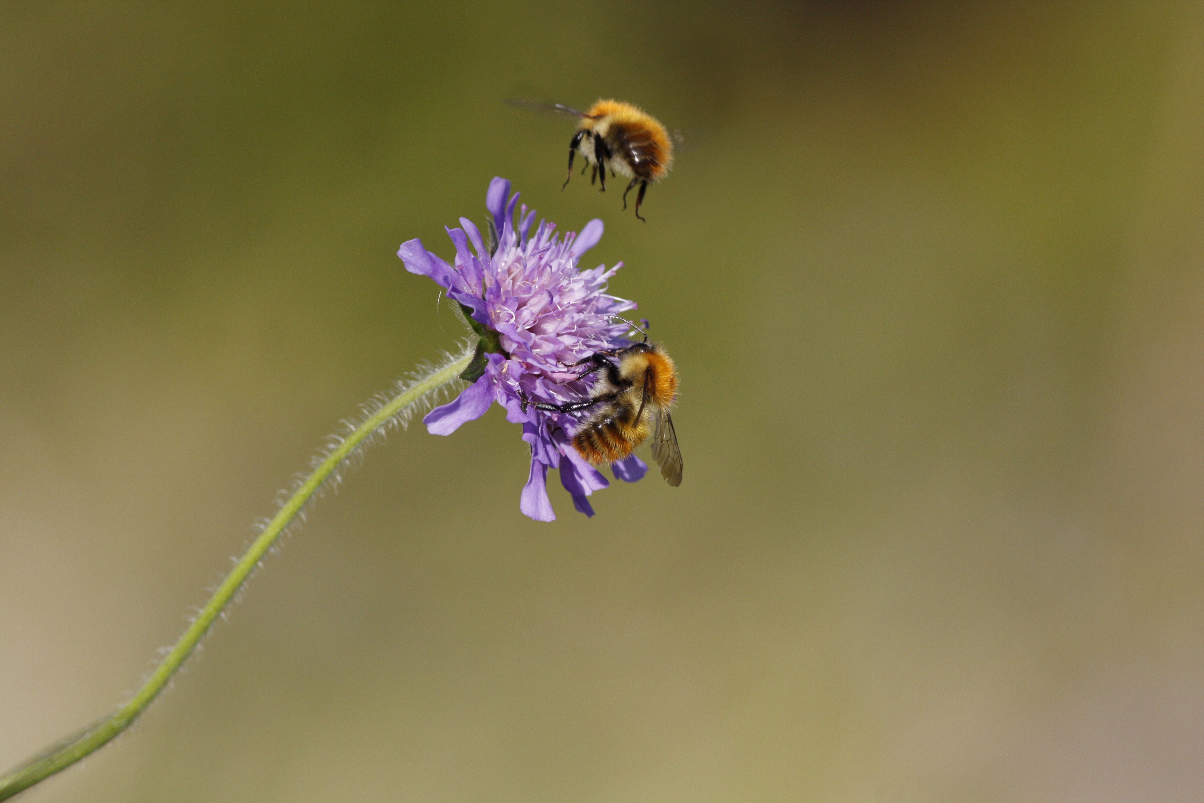 Homes for Insects and Minibeasts The RSPB